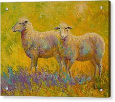 Warm Glow - Sheep Pair Acrylic Print by Marion Rose