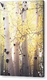 Acrylic Print featuring the photograph Warm Gold by The Forests Edge Photography - Diane Sandoval