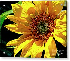 Warm Welcoming Sunflower Acrylic Print