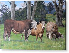 Warrawillah Cattle Acrylic Print by Louise Green