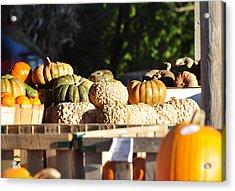Wart Pumpkins Acrylic Print by Jan Amiss Photography