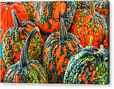 Warty Pumkins  Acrylic Print