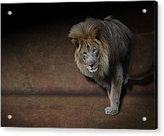Acrylic Print featuring the photograph Was That My Cue? - Lion On Stage by Debi Dalio