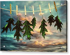 Wash Day Acrylic Print by Bob Orsillo