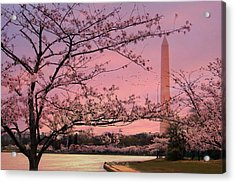 Acrylic Print featuring the photograph Washington Monument Cherry Blossom Festival by Shelley Neff