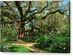 Washington Oaks Gardens Acrylic Print