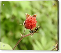 Wasp And Berry Acrylic Print