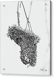 Wasp Nest Heart Acrylic Print
