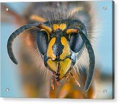 Wasp Portrait Acrylic Print by Alexey Kljatov