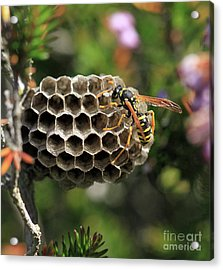 Wasp Acrylic Print by Stephan Grixti