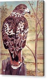 Watch Hawk Acrylic Print by Debra Sandstrom