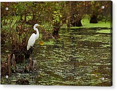 Watchful Eye Acrylic Print