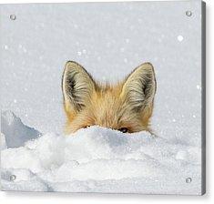 Watchful Eye Acrylic Print