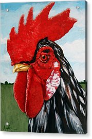 Watchful Rooster Farm Animal Painting Acrylic Print by Linda Apple