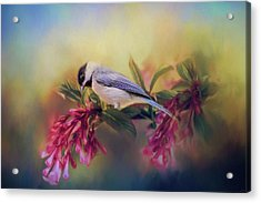 Watching Flowers Bloom Bird Art Acrylic Print by Jai Johnson