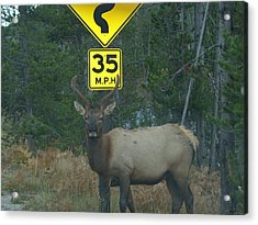 Watching For Speeders Acrylic Print