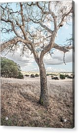 Acrylic Print featuring the photograph Watching In Silence by Alexander Kunz