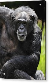 Watching Acrylic Print by Keith Lovejoy