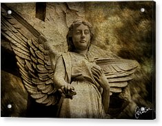 Watching Over Us Acrylic Print by Christine Hauber