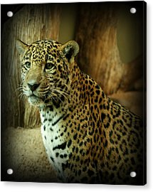 Watching Acrylic Print by Sandy Keeton