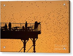 Watching The Sunset And Starlings In Aberystwyth Wales Acrylic Print