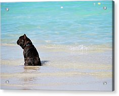 Acrylic Print featuring the photograph Watching The Waves by Amee Cave