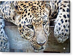Watching You Acrylic Print