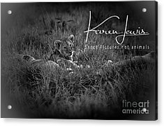 Acrylic Print featuring the photograph Watching You Watching Me by Karen Lewis