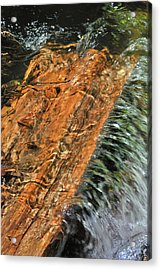 Water And Wood Acrylic Print