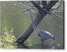 Water Bird And River Tree Acrylic Print