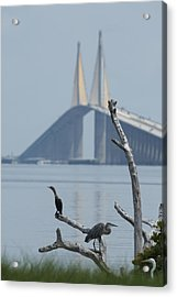 Water Birds On Tampa Bay Acrylic Print by Carl Purcell