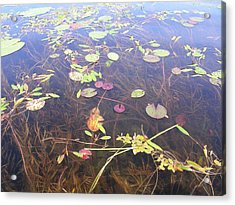Water Colors Acrylic Print by Peter  McIntosh