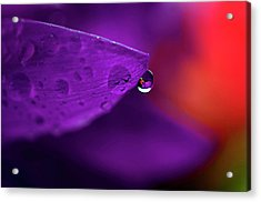 Water Drop Reflections With Purple II Acrylic Print