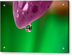 Water Drop Reflections With Purple Acrylic Print