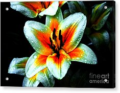 Water Droplet Covered White Lily  Acrylic Print by Andee Design
