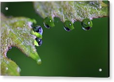 Acrylic Print featuring the photograph Water Droplet IIi by Richard Rizzo