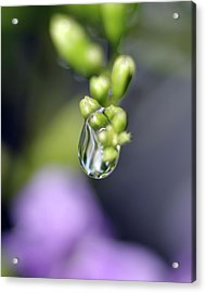 Acrylic Print featuring the photograph Water Droplet Iv by Richard Rizzo