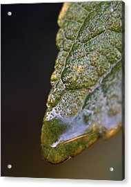 Acrylic Print featuring the photograph Water Droplet V by Richard Rizzo