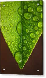 Water Droplets On Lemon Leaf Acrylic Print by PIXELS  XPOSED Ralph A Ledergerber Photography