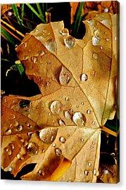 Water Drops Acrylic Print by Liz Vernand