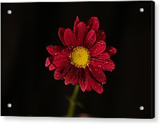 Acrylic Print featuring the photograph Water Drops On A Flower by Jeff Swan