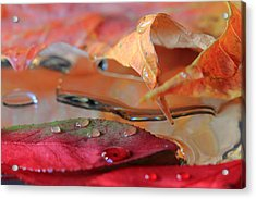 Water Drops On Autumn Leaves Acrylic Print