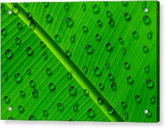 Water Drops On Palm Leaf Acrylic Print by Georgeta Blanaru