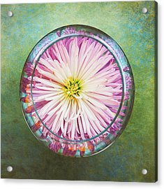 Water Flower Acrylic Print by Scott Norris