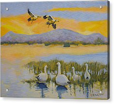 Water Fowl, Sutter Buttes Acrylic Print