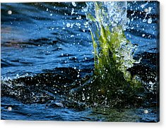 Water Games Acrylic Print by Heike Hultsch