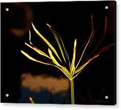 Water Grass Acrylic Print
