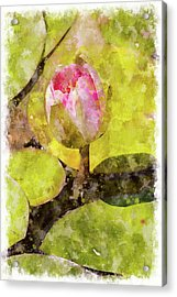 Water Hyacinth Bud Wc Acrylic Print by Peter J Sucy
