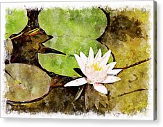 Water Hyacinth Two Wc Acrylic Print by Peter J Sucy