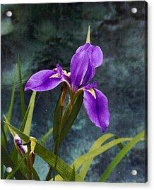 Water Iris Acrylic Print by Rebecca Shupp